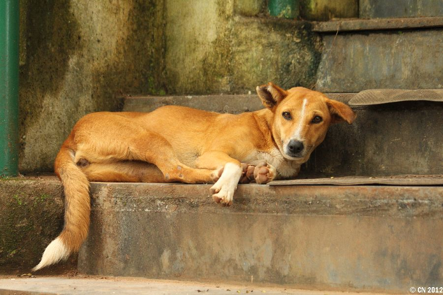 Restricted Dog Breeds In India