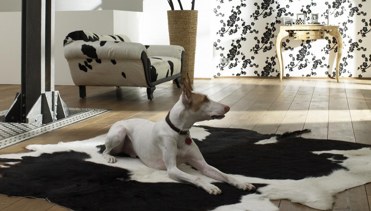 schneller wohnen mit hund welcome to podifee 39 s blog. Black Bedroom Furniture Sets. Home Design Ideas
