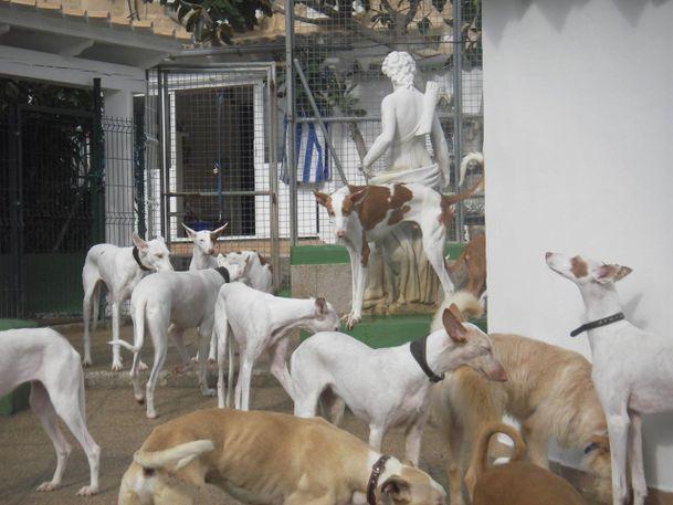 Hundegruppe2