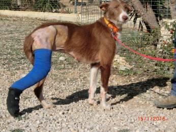 TIBIA - wurde mit gebrochenem Bein aufgefunden; ein halb abgetrenntes Ohr hatte sie vorher schon.