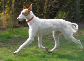 IZUMI found a new home between Bremen and Hannover in April 09.
