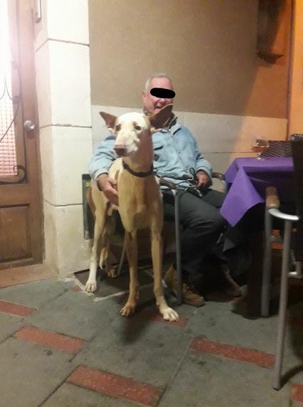 Mallorquiner mit seinem Podenco in einer Bar